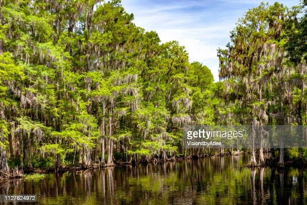 stream through a cypress swamp in florida - kissimmee stock pictures, royalty-free photos & images