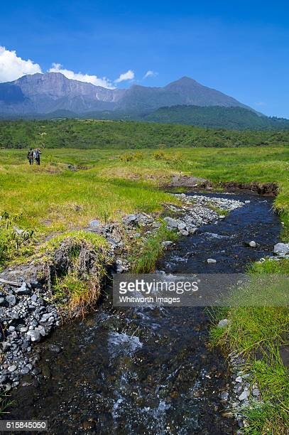 stream through arusha national park, tanzania - mount meru stock photos and pictures