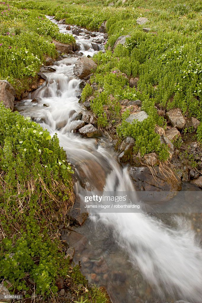 Stream through wildflowers, American Basin, Colorado, United States of America, North America : Stock Photo