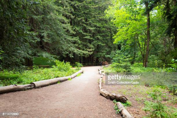 Stream trail passing through coast redwood trees in Redwoods Regional Park Oakland California May 26 2017