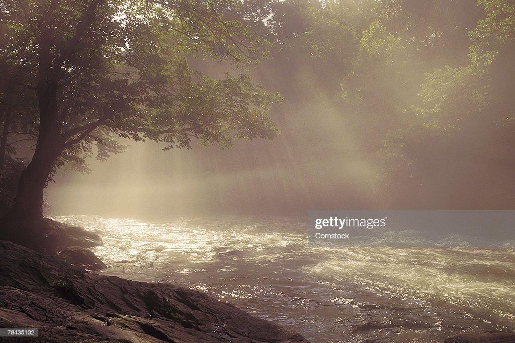 Stream with tree and sunbeams : Stockfoto