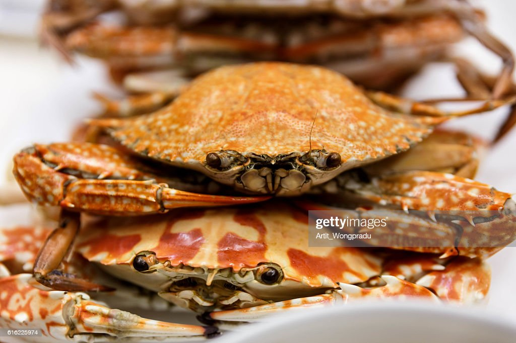 Streamed Horse Crabs Stacked on The White Plate : Stock Photo