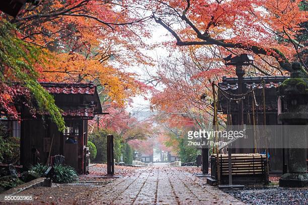 Street Amidst Autumn Trees
