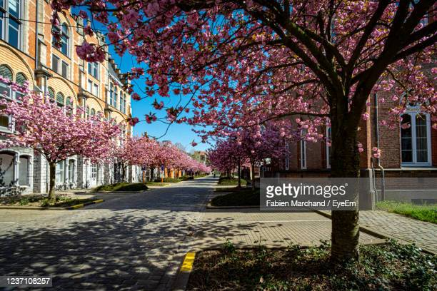 street amidst cherry trees and buildings against sky - belgium stock pictures, royalty-free photos & images
