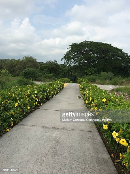 Street Amidst Flowering Plants At Park Against Cloudy Sky