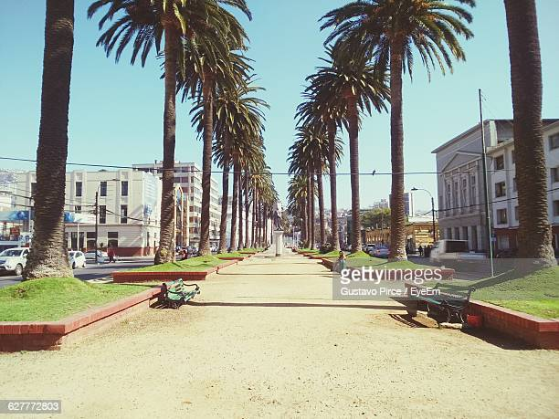 Street Amidst Palm Trees In City Against Sky