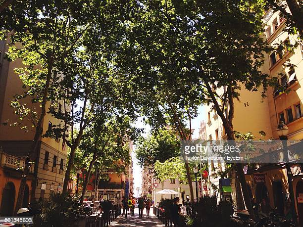 Street Amidst Trees And Buildings In City