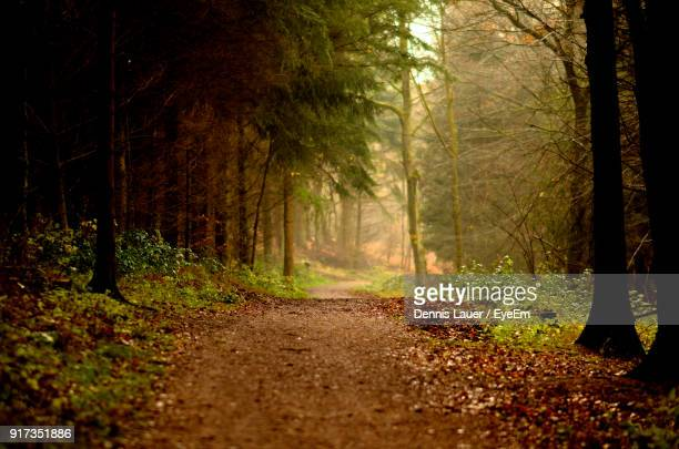 Street Amidst Trees In Forest During Autumn