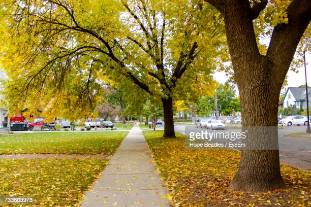street amidst trees in park during autumn - tree trunk stock pictures, royalty-free photos & images