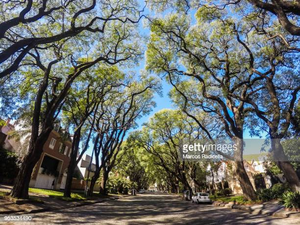street at buenos aires with big trees - radicella stock pictures, royalty-free photos & images