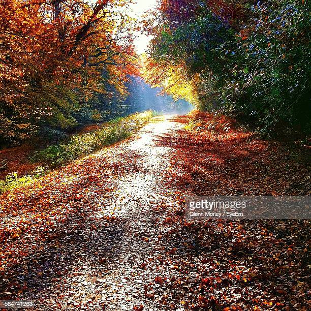Street By Trees In Epping Forest During Autumn