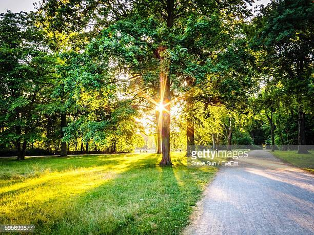 street by trees in park during sunrise - park stock-fotos und bilder