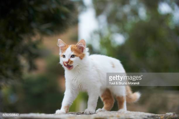 street cat, cyclades islands, greece - stray animal stock pictures, royalty-free photos & images