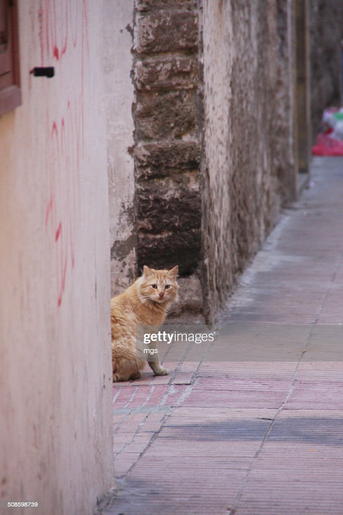 Street cat : Stock Photo