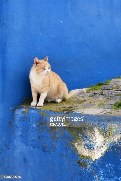 a street cat portugal - monchique stock pictures, royalty-free photos & images