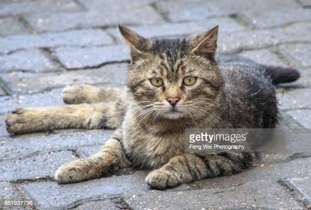 Street Cat, Safranbolu, Turkey