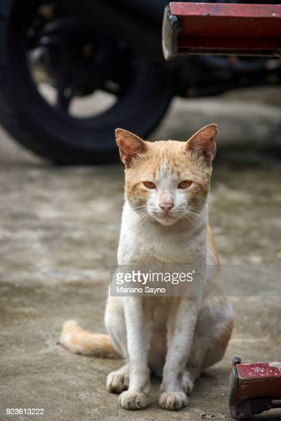 Street cat sit while looking at the camera
