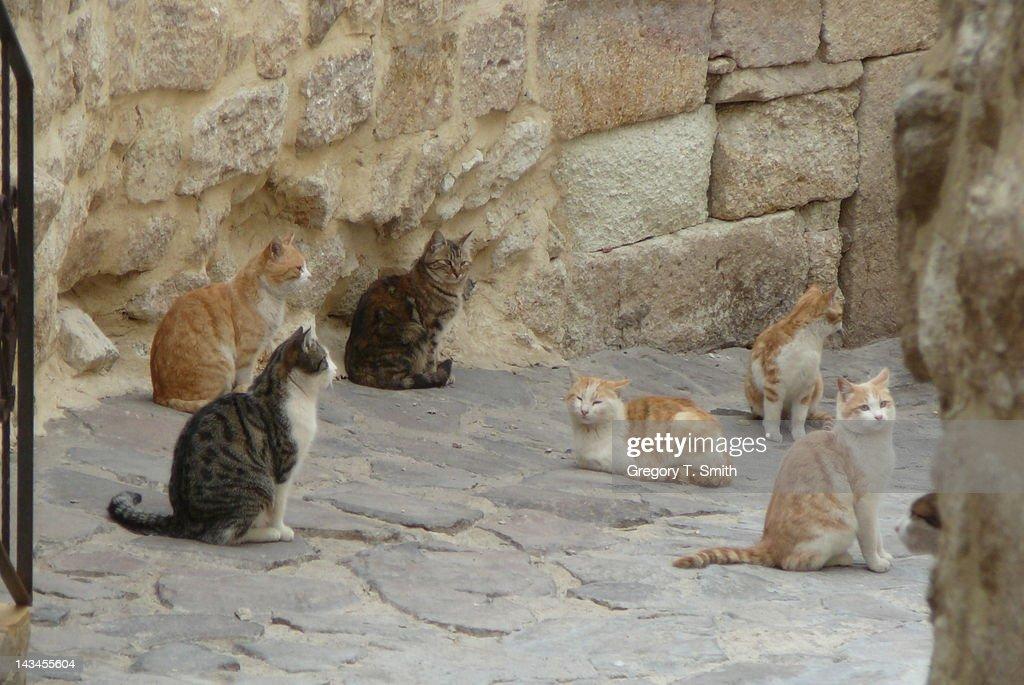 Street cats in Cappadocia : Stock Photo