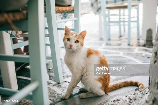 street cats in greece - undomesticated cat stock pictures, royalty-free photos & images