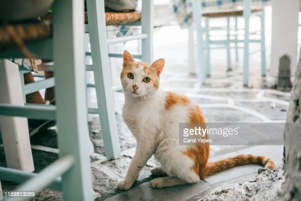 street cats in greece - felino salvaje fotografías e imágenes de stock