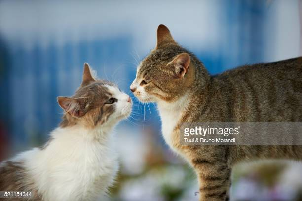street cats, mykonos, cyclades, greece - two animals stock pictures, royalty-free photos & images