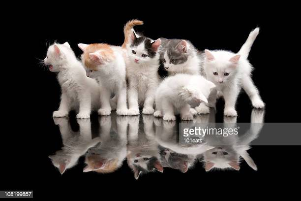 street cats - medium group of animals stock pictures, royalty-free photos & images