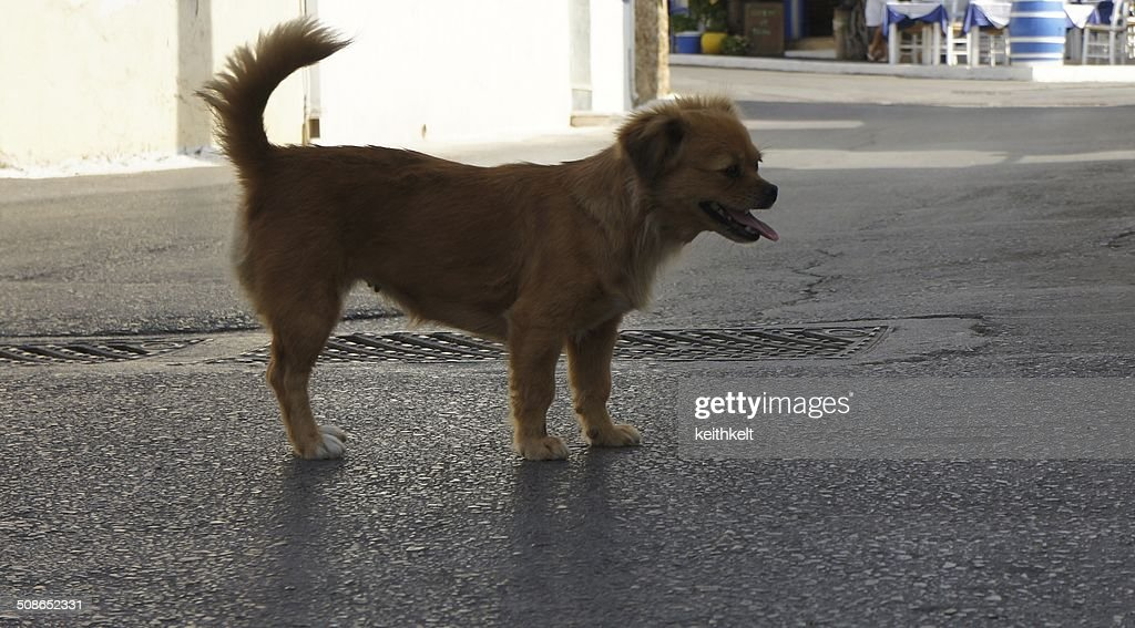 street dog crete : Stock Photo
