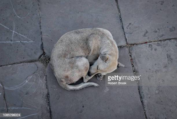 street dog, cuba - animal welfare stock pictures, royalty-free photos & images