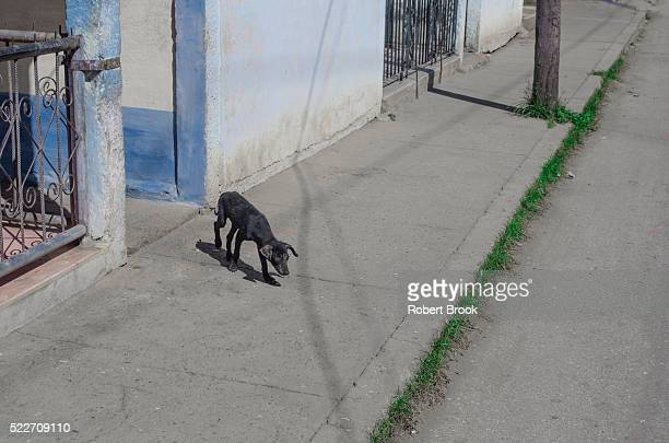 street dog on sidewalk - stray animal stock pictures, royalty-free photos & images