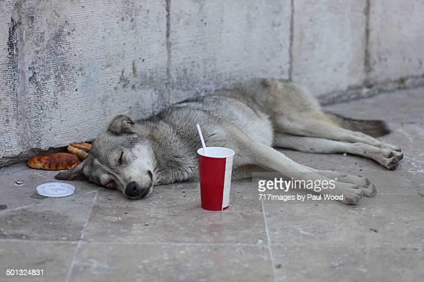 Street Dog Takeaway