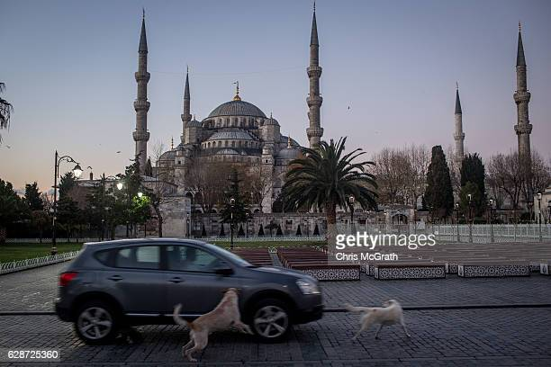 Street dogs chase a car in front of Istanbul's famous Blue Mosque on December 8 2016 in Istanbul Turkey The Blue Mosque one of Turkey's most visited...