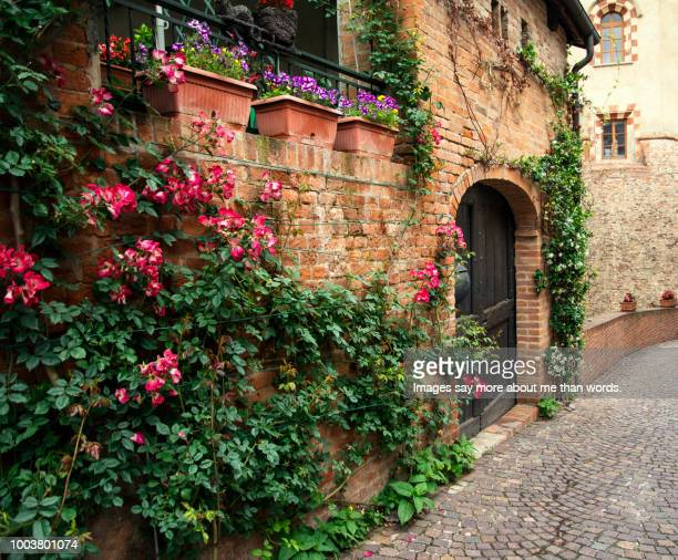 a street facade ornated with climbing roses. barolo. italy. - piedmont italy stock photos and pictures