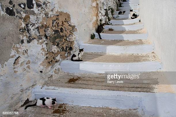 Street full of feeding cats Megalochori Santorini