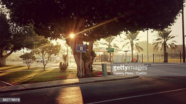 Street In Front Of Tree On Sunny Day