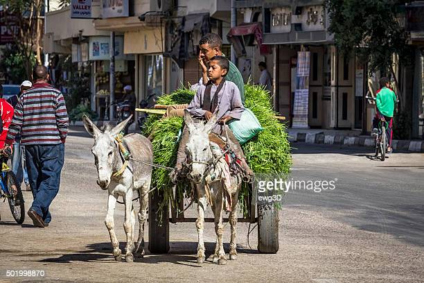 street in luxor, egypt - ox cart stock photos and pictures