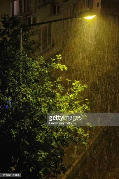 street lamp and lemon tree under rain at night. - emreturanphoto stock pictures, royalty-free photos & images