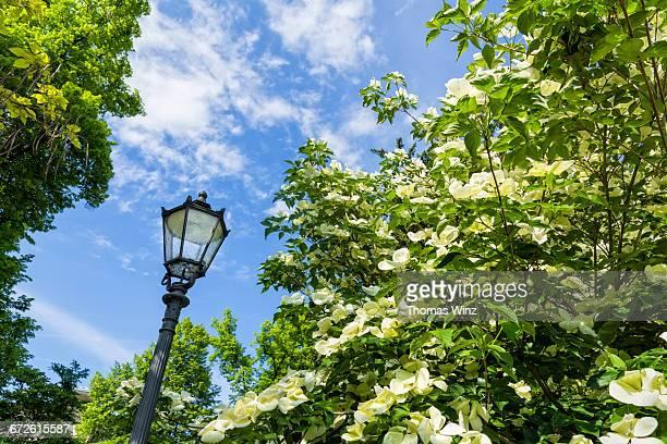 Street Lamp Lichtentaler Allee