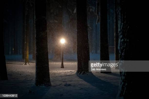 street light in a snowy park at night, portland, oregon - natural phenomenon stock pictures, royalty-free photos & images
