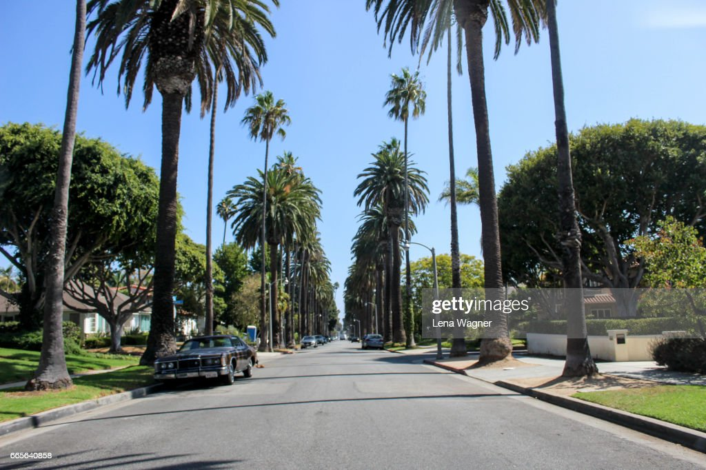 Street lined with palm trees : Stock Photo
