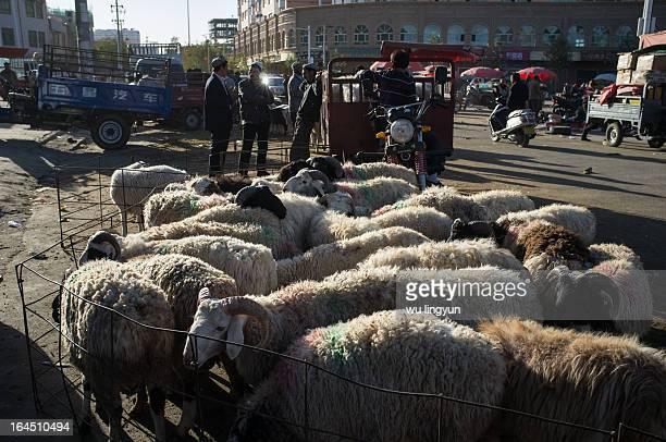 CONTENT] street livestock market of Hotan south of Xinjiang