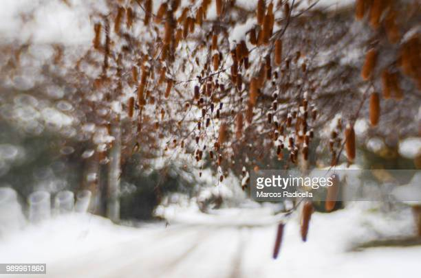 street of bariloche in winter - radicella stock pictures, royalty-free photos & images