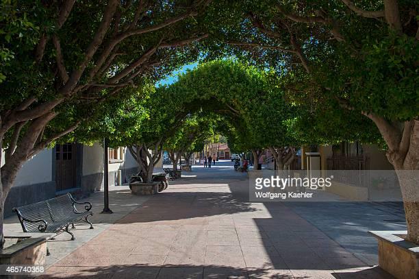 Street scene with trees in the town of Loreto Sea of Cortez Baja California Mexico