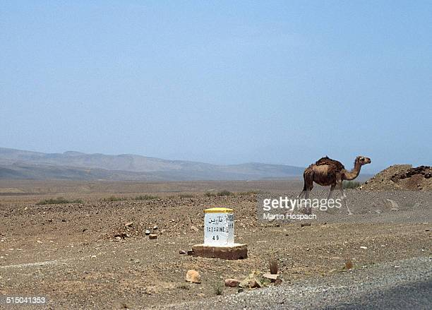 Street sign and camel in desert against clear blue sky, Zagora Province, Morocco