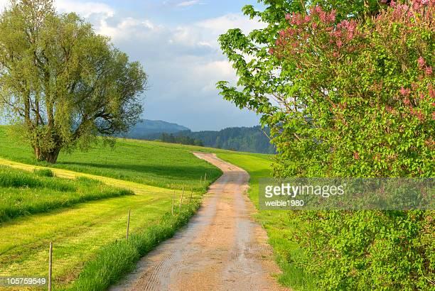 Street through the fields