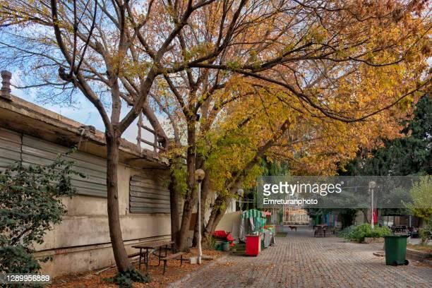 street vendor kiosk under trees in public park. - emreturanphoto stockfoto's en -beelden
