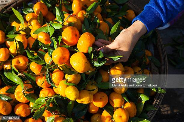 Street vendor preparing mandarins for sale, Vietnam