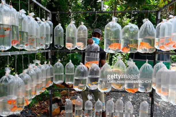Street vendor selling freshwater fish waits for customers in Kalutara on the outskirts of Colombo on February 24, 2021.