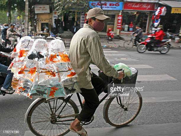 Street vendor transports a fragile cargo of bags of gold fish on his bike through the back streets of Hanoi near Ho Chi Min's tomb