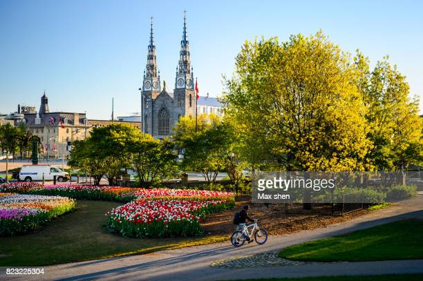 street view of city ottawa near the major's hill park, canada. - ottawa stock pictures, royalty-free photos & images