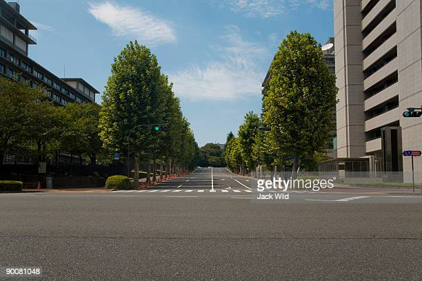 Street with trees